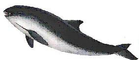marsouin