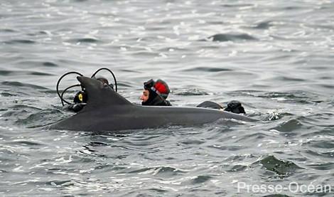 Les plongeurs d'Exocet sont parfois spontanément approchés par des cétacés : ici un dauphin.