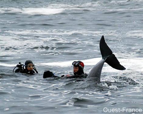Ici, les plongeurs du club de plongée Exocet, de Saint-Hilaire-de-Chaléons, ont pu s'approcher des dauphins. : Club de plongée Exocet